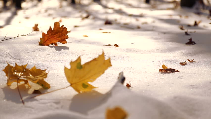 Snow Leaves